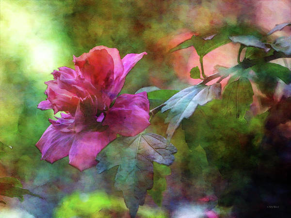 Photograph - Rose Of Sharon On The Branch 4066 Idp_2 by Steven Ward