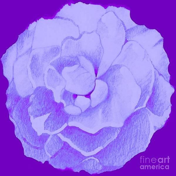 Digital Art - Rose On Purple by Helena Tiainen
