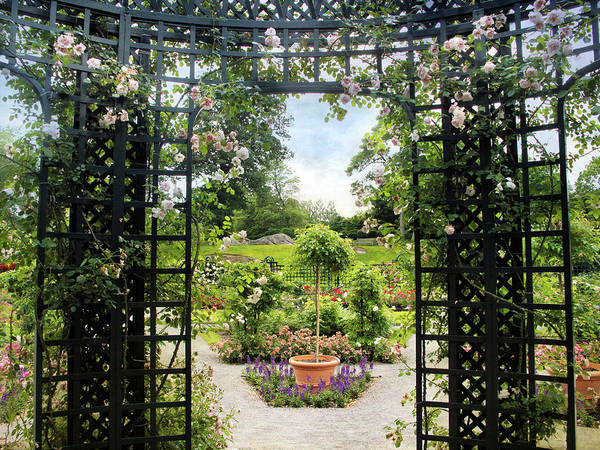 Photograph - Rose Pergola Views by Jessica Jenney