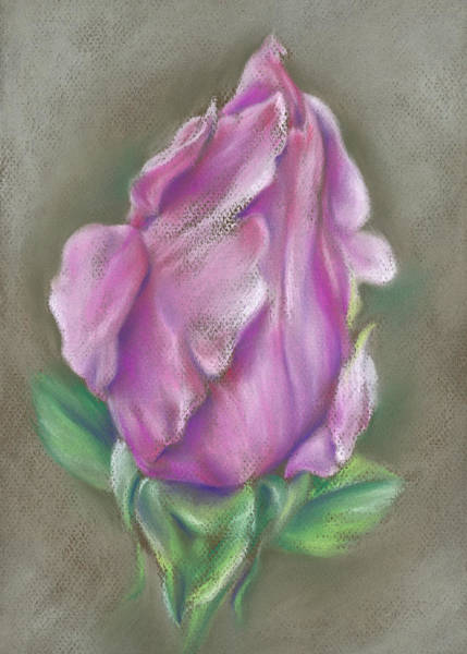 Pastel - Rose Pink by MM Anderson