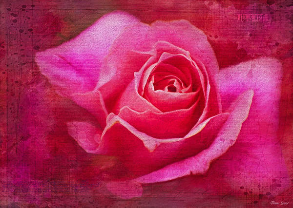 Photograph - Rose Pretty In Pink by Anna Louise