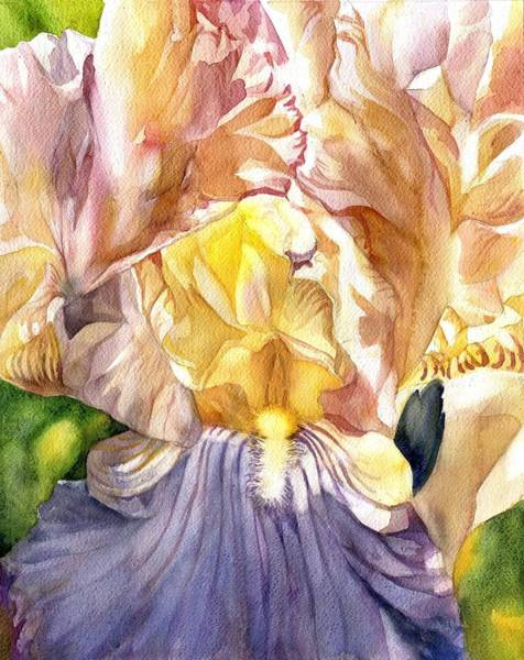 Painting - Rose Quartz Iris Watercolor by Alfred Ng