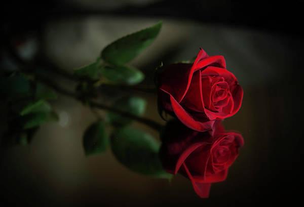 Rose Reflected Art Print