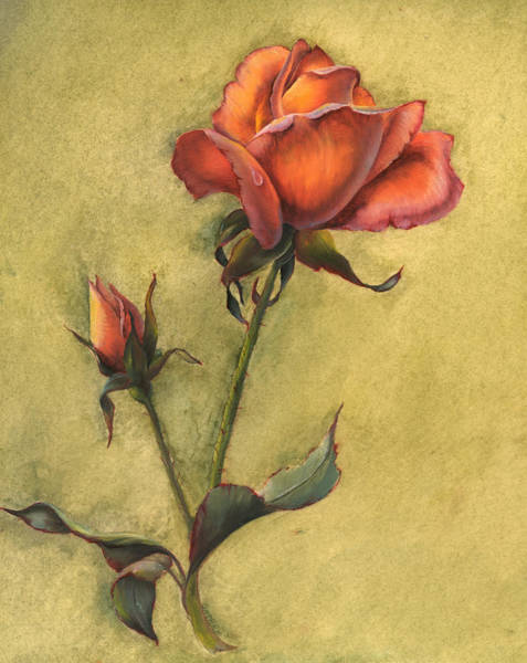 Painting - Rose by Sherry Shipley