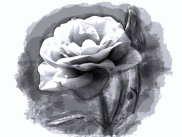 Wall Art - Digital Art - Rose Unplugged  by Movie Poster Prints