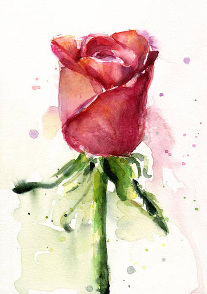 Romantic Wall Art - Painting - Rose Watercolor by Olga Shvartsur