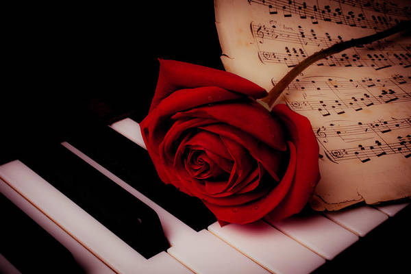 Wet Rose Wall Art - Photograph - Rose With Sheet Music On Piano Keys by Garry Gay
