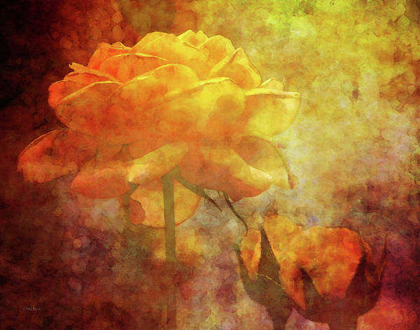 Photograph - Rose With Twins 1156 Idp_3 by Steven Ward