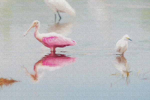 Photograph - Roseate Spoonbill Eating In A Lagoon by Dan Friend