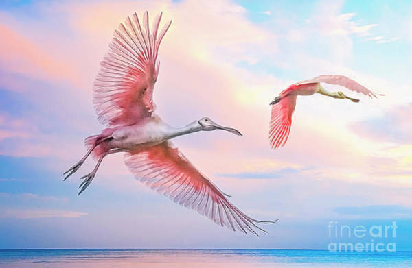 Photograph - Roseate Spoonbills In Flight. by Brian Tarr