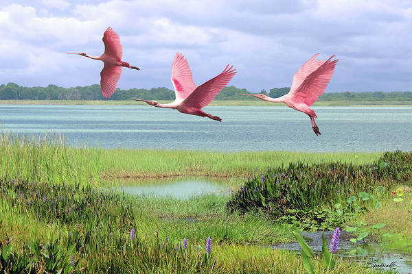 Wall Art - Digital Art - Roseate Spoonbills Of Florida Bay by M Spadecaller