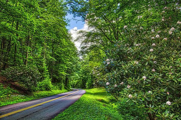 Photograph - Rosebay Heaven by Dale R Carlson