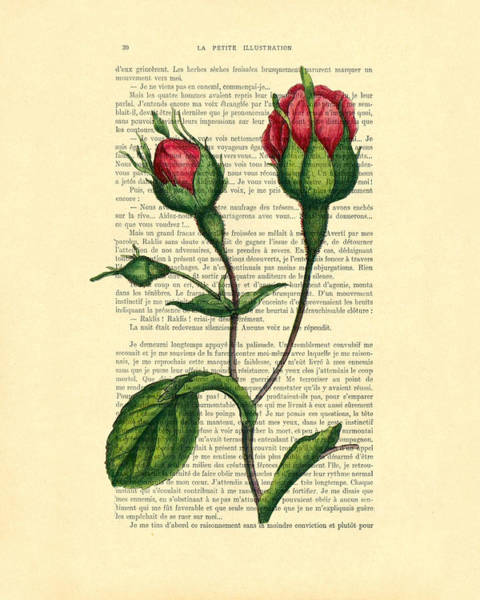 Wall Art - Digital Art - Rosebud Illustration On A Vintage Dictionary Book Page by Madame Memento