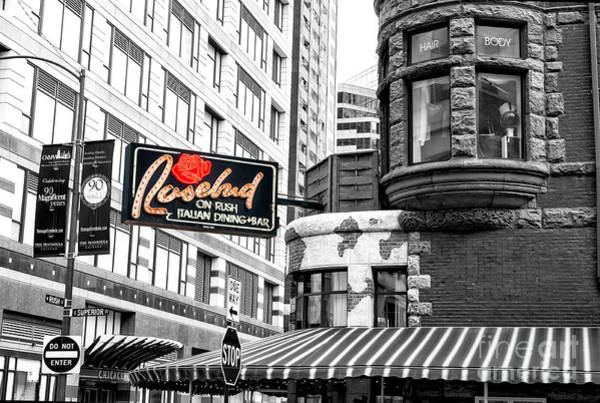 Photograph - Rosebud On Rush Chicago by John Rizzuto