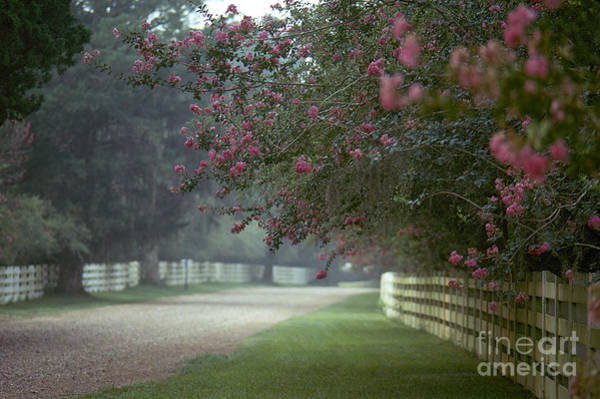Photograph - Rosedown Plantation by Granger
