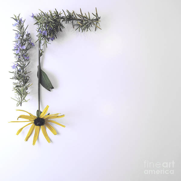 Photograph - Rosemary And Rudbeckia by Cindy Garber Iverson