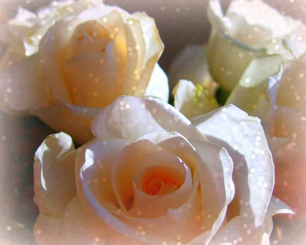 Photograph - Roses #11 by Anne Westlund
