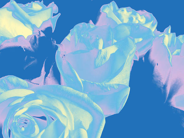 Photograph - Roses #3 by Anne Westlund