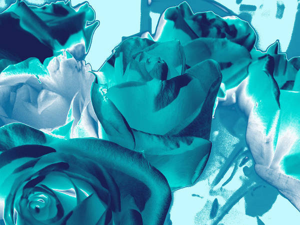 Photograph - Roses #4 by Anne Westlund