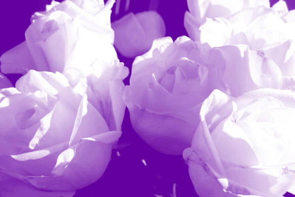 Photograph - Roses #7 by Anne Westlund