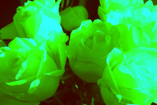 Photograph - Roses #8 by Anne Westlund