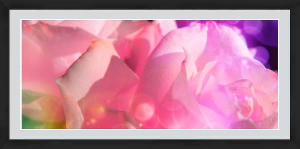 Photograph - Roses #9 by Anne Westlund