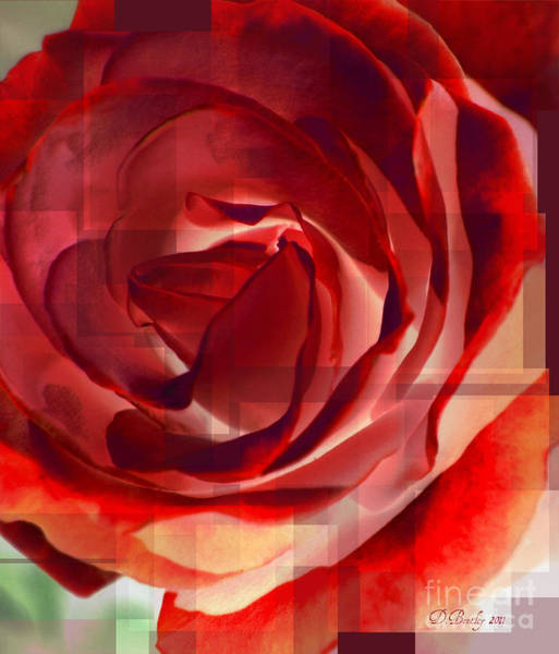 Photograph - Roses Are Red 1 by Donna Bentley