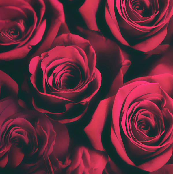 Photograph - Roses Are Red by Jessica Jenney