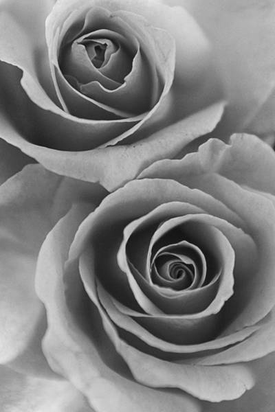 Photograph - Roses Black And White by Jill Reger