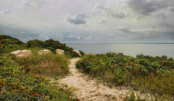 Photograph - Roses By The Sea by Robin-Lee Vieira