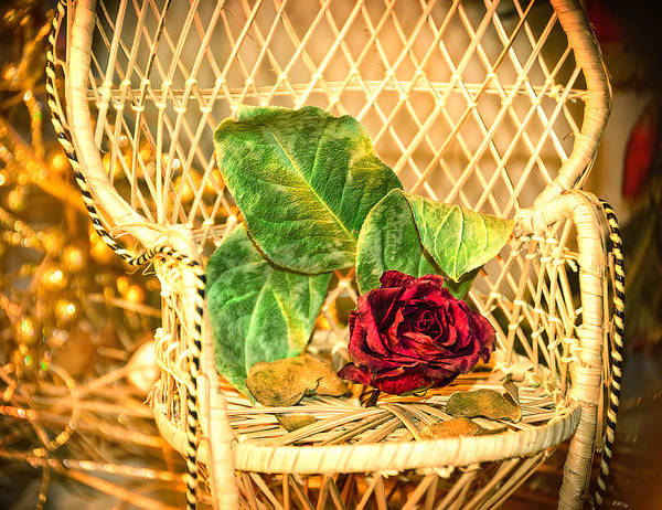 Wall Art - Photograph - Roses' Chair by Camille Lopez