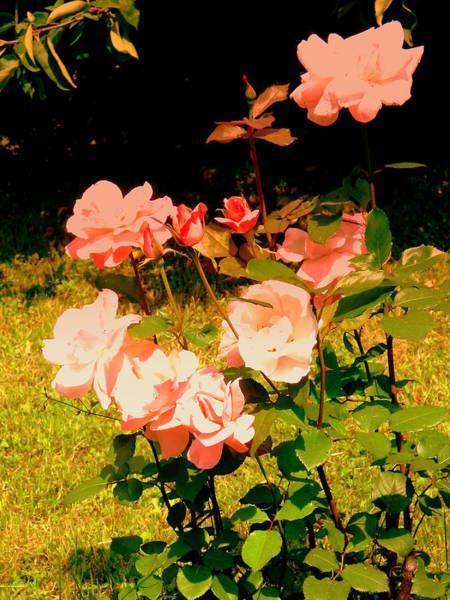 Gorecki Photograph - Roses by Henryk Gorecki