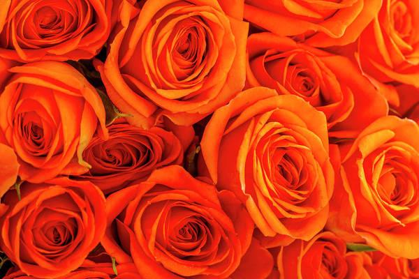Photograph - Roses In Orange by Teri Virbickis