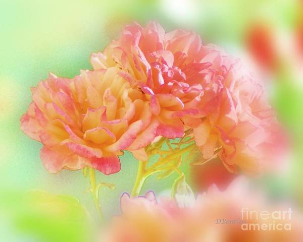 Photograph - Roses In Threes by Donna Bentley