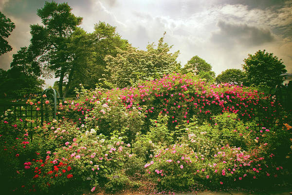Photograph -  Roses Reign by Jessica Jenney