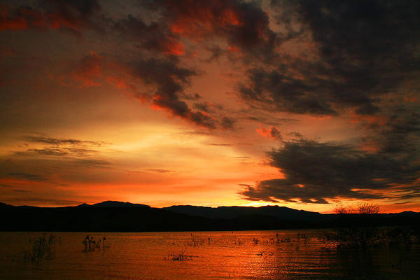 Photograph - Rosevelt Sunrise by Randy Oberg