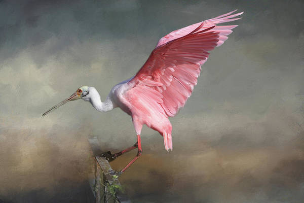 Wader Photograph - Rosy by Donna Kennedy