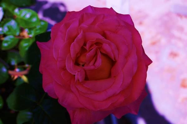 Rosy Morning Art Print