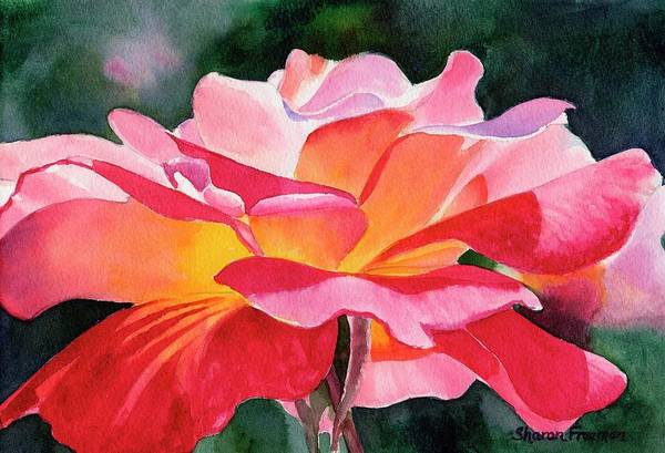 Red Rose Painting - Rosy Red Rose Blossom by Sharon Freeman