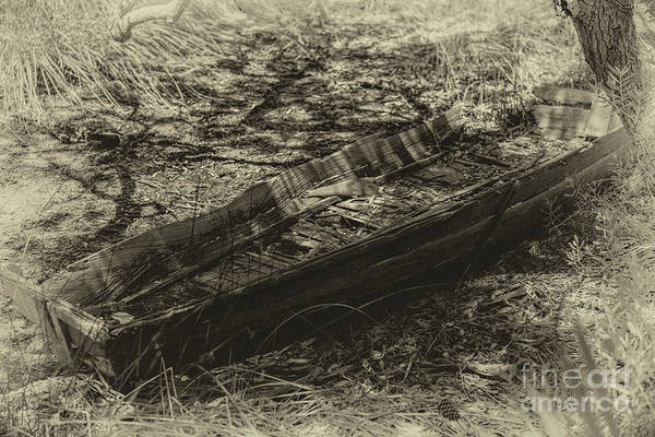 Photograph - Rot And Decay by Dale Powell
