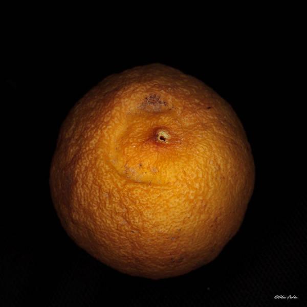 Photograph - Rotten Lemon by Alexander Fedin