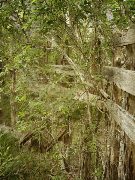 Photograph - Rotting In The Woods by Charles McKelroy