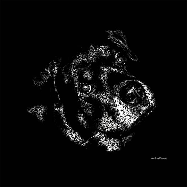 Digital Art - Rottweiler Mozart Portrait by Miss Pet Sitter