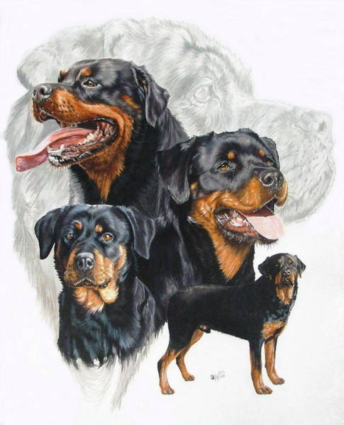 Mixed Media - Rottweiler Medley by Barbara Keith