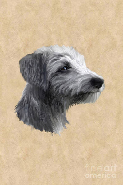 Sighthound Wall Art - Painting - Rough Coated Lurcher  by John Edwards