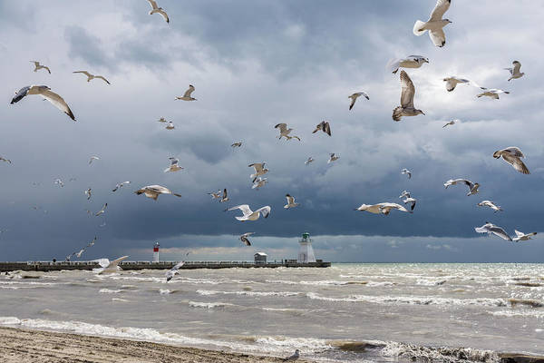 Photograph - Rough Flight At Port Dover Lighthouse by Georgia Mizuleva