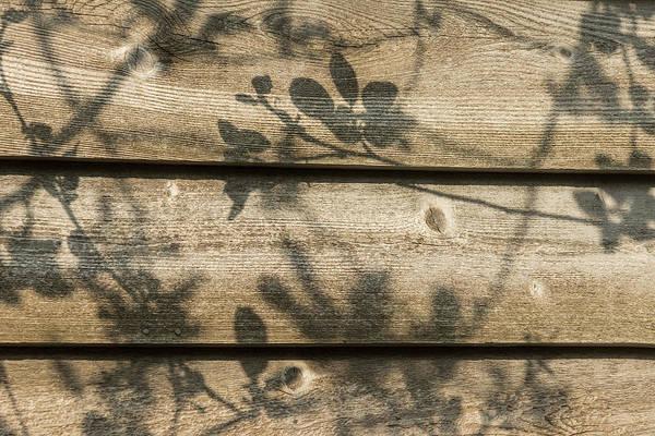 Photograph - Rough Shadows by Georgia Mizuleva