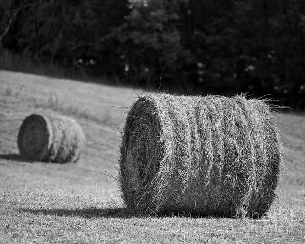 Photograph - Round Bales by Patrick M Lynch