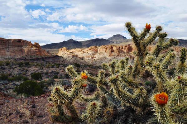Photograph - Route 66 Mojave Desert by Kyle Hanson