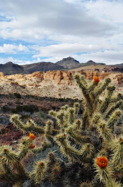 Photograph - Route 66 Mojave Desert Portrait by Kyle Hanson